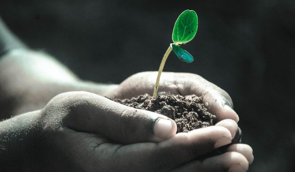 La importancia de cultivar en un Invernadero