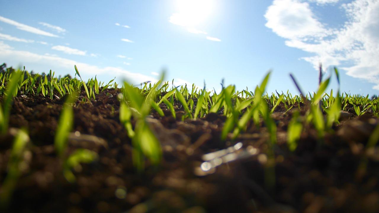 Las plantas capaces de afrontar la sequía del verano