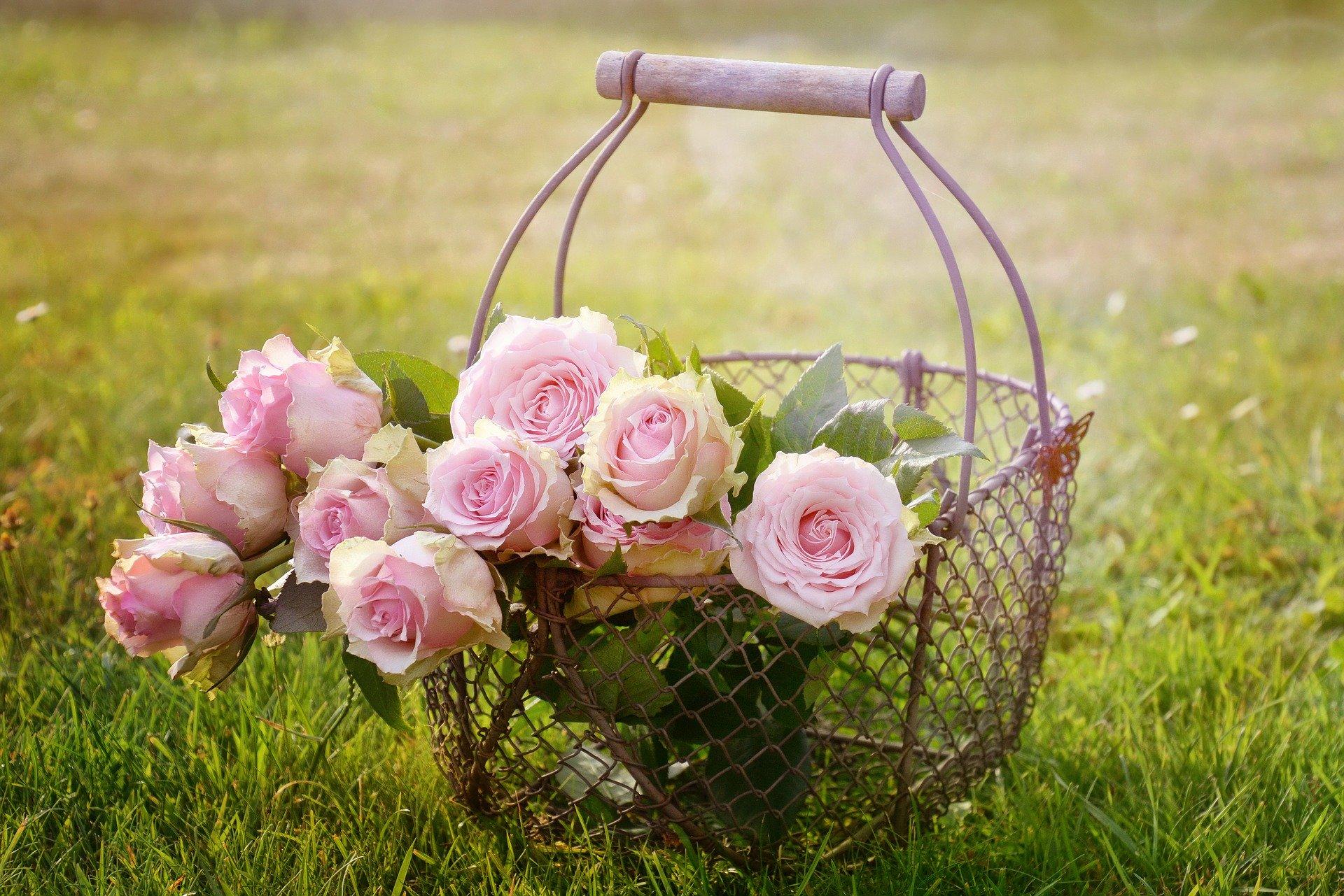 Prepara tu jardín para la llegada del verano