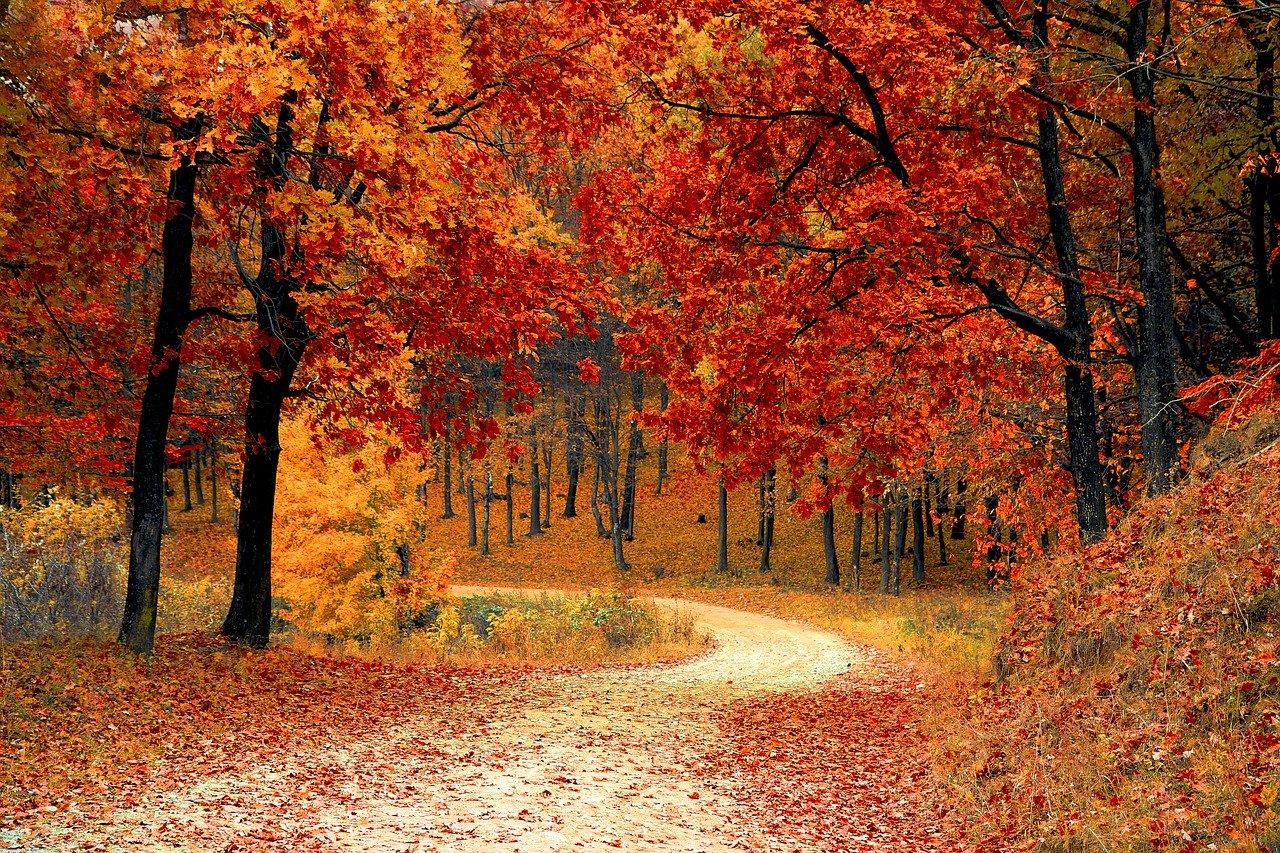 Pinta de intensos colores tu jardín con árboles de otoño