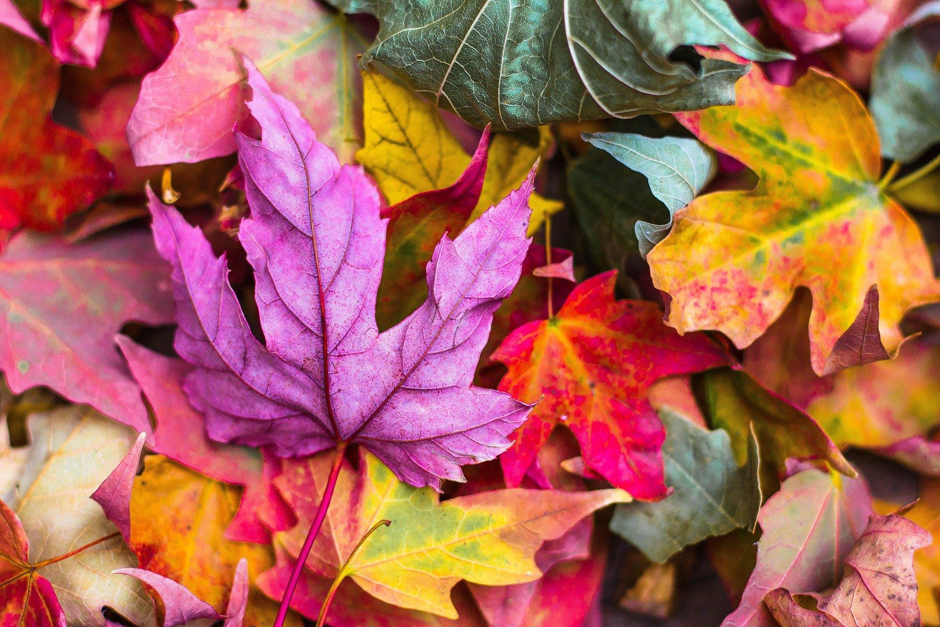 Plantas de interior que no pueden faltar en tu hogar este otoño