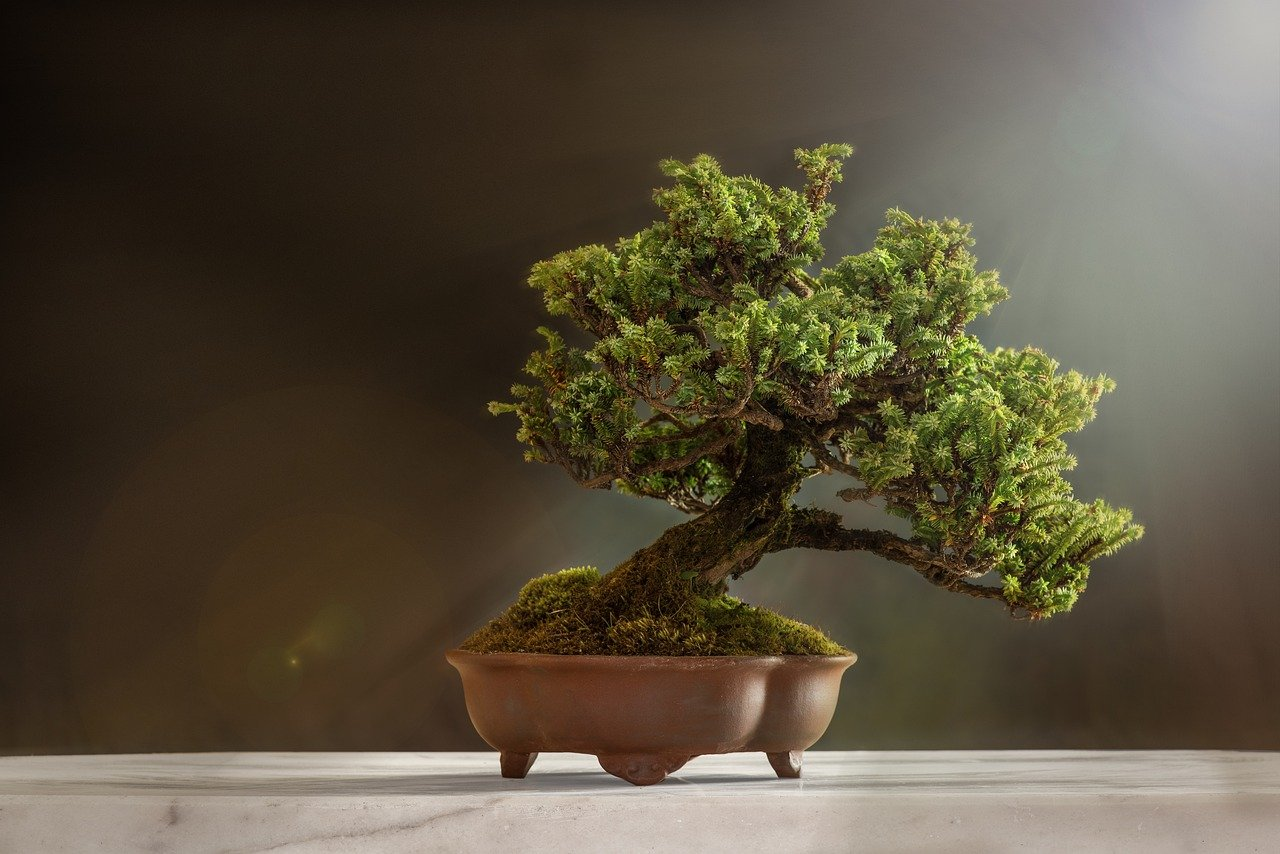 Cómo iniciarte en el mundo del bonsai